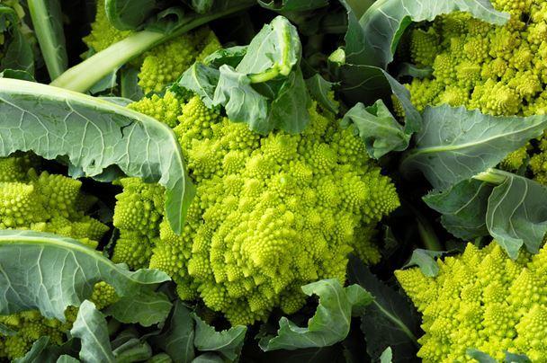 Выращивание капусты Романеско: описание с фото, агротехника, отзывы огородников