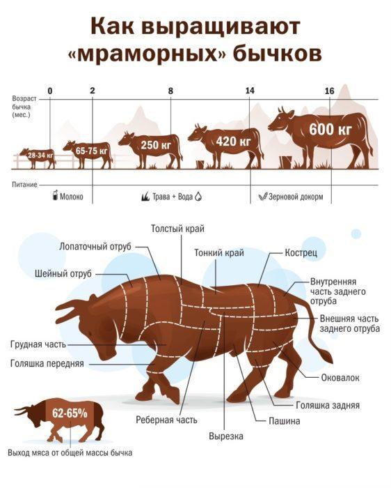 Отек вымени у коров: причины, симптомы, лечение и профилактики