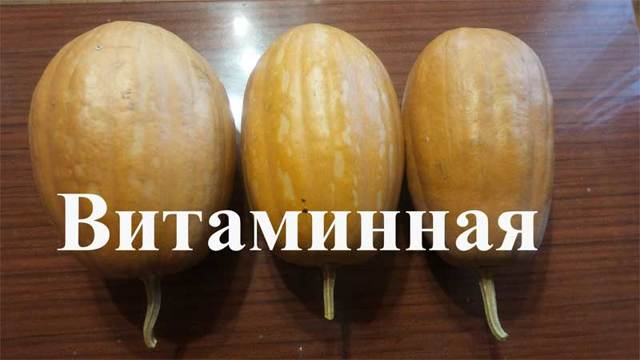 Тыква Витаминная: описание, сроки посадки, выращивание, плюсы и минусы, отзывы