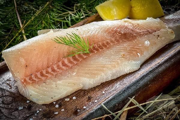 Нельма: описание рыбы, распространение, питание, нерест, ловля и выращивание