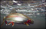 Выращивание рыбы в бассейне: технология, преимущества и недостатки