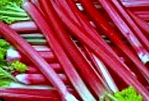 Лучшие сорта ревеня: характеристики, фото, сроки созревания, урожайность