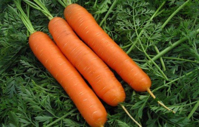 Морковь Нантская: описание сорта, фото, выращивание, болезни и отзывы