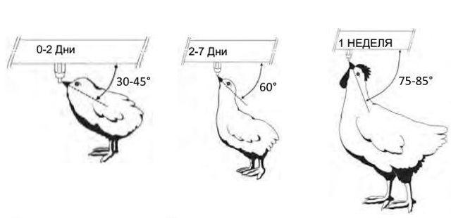 Поилка для кур своими руками: пошаговые инструкции, схемы, полезные советы