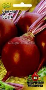Лучшие сорта свеклы: характеристики, фото, агротехника