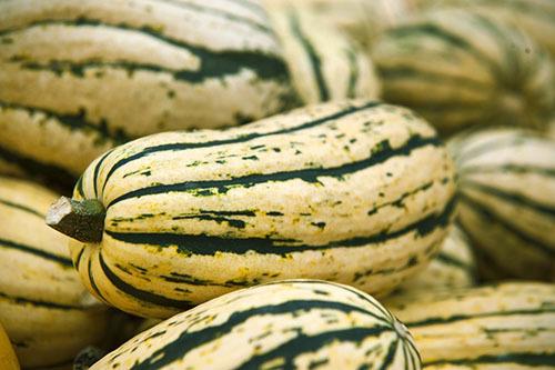 Тыква Спагетти: характеристика сорта, фото, посадка, уход, отзывы