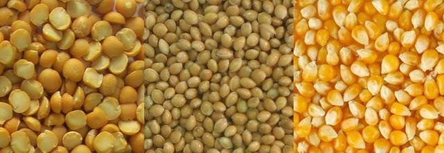 Чем кормить индюшат: питание по возрасту, витамины и откорм