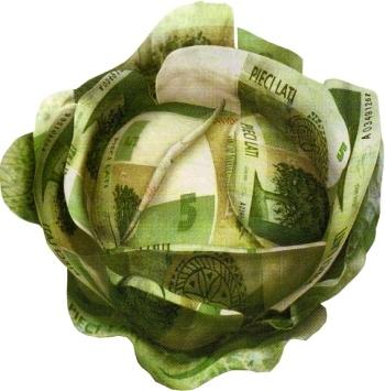 Капуста белокочанная: сорта, посадка, уход и сбор урожая