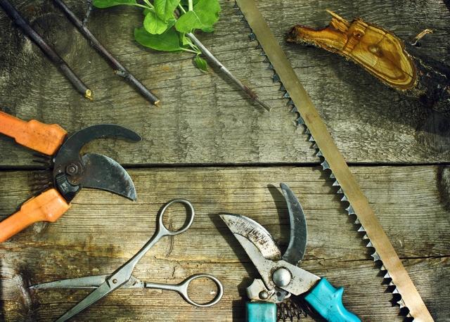 Обрезка черешни: сроки, схемы, инструменты и подробные инструкции