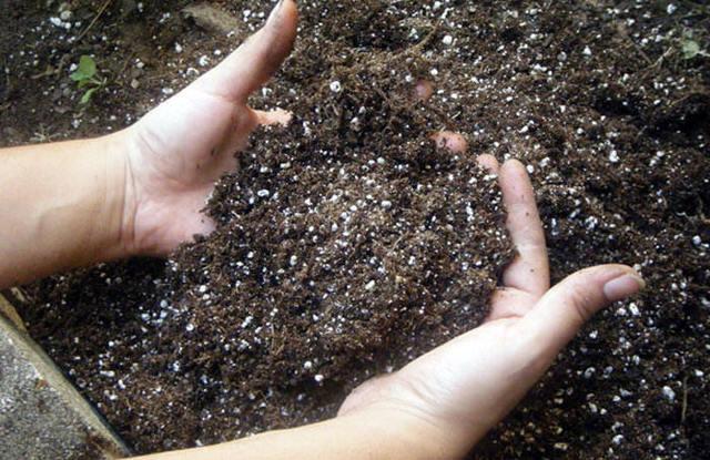 Перец Какаду: описание с фото, посадка, выращивание и уход, достоинства и недостатки, отзывы