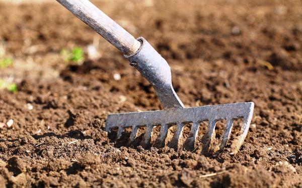 Овес как сидерат: польза, недостатки, посев, уход, технология скашивания
