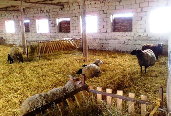 Загон для овец своими руками: инструкции, требования, этапы строительства