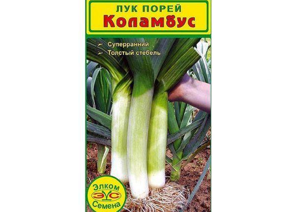 Лук-порей: описание сорта, фото, посадка и уход, сбор и хранение урожая