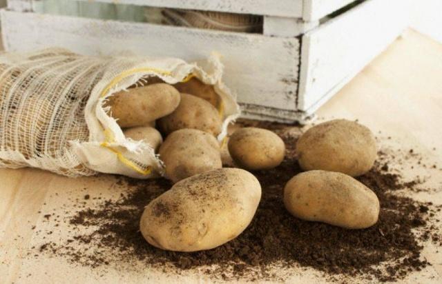 Картофель Тимо: описание сорта, фото, выращивание, сравнение с другими сортами
