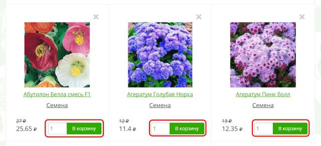 Укроп кустистый: описание сорта с фото, посадка и уход