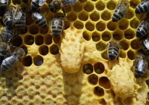 Противороевые методы пчеловодства: разновидности и механизмы действия