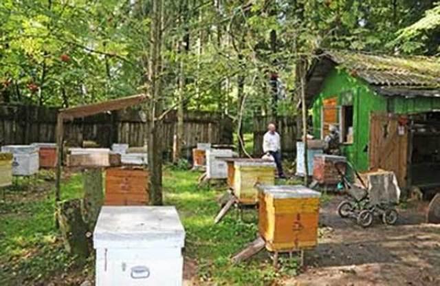 Пчеловодство в Башкирии: особенности, сложности, плюсы и минусы
