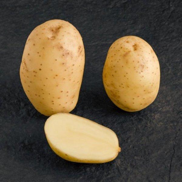 Картофель Мелодия: описание сорта, фото, выращивание и уход