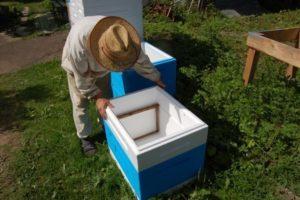 Кормушки для пчел своими руками: виды, инструкции, советы