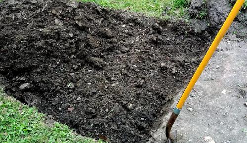 Помидоры: посадка и уход в открытом грунте, подготовка почва, подвязывание, ошибки