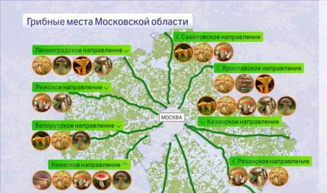 Грибы Подмосковья (съедобные и ядовитые): фото, описание, где и когда растут