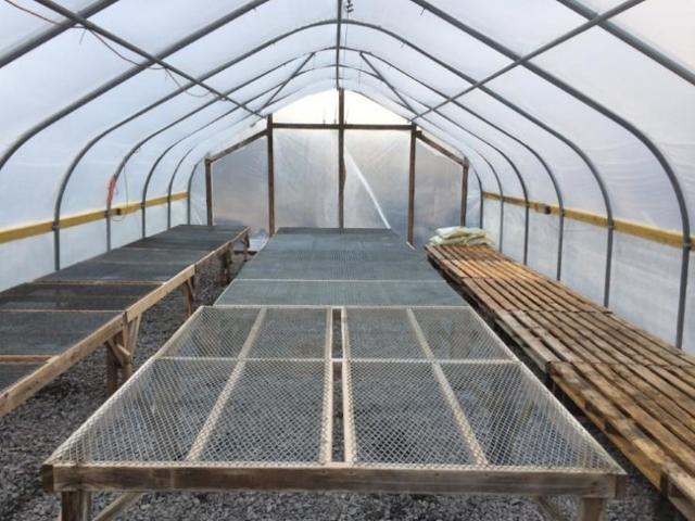 Обработка теплицы из поликарбоната весной: сроки, этапы, советы