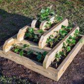 Вьющаяся клубника: правила выращивания, плюсы и минусы, особенности ухода