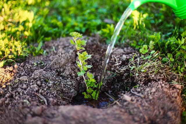 Уход за крыжовником осенью: обработка почвы, обрезка, подкормка и ошибки садоводов
