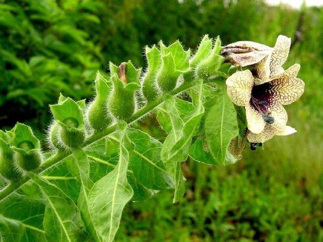 Отравление пчел: причины, симптомы, профилактика