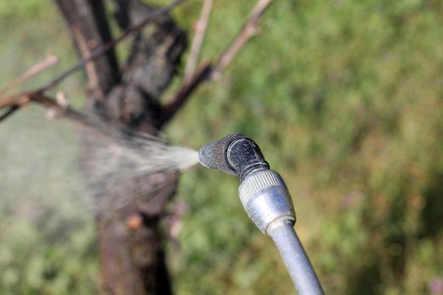 Опрыскивание винограда весной: обзор эффективных средств и важные рекомендации