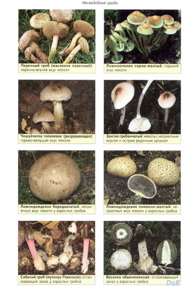 позы все грибы фото с названиями съедобные и несъедобные каталог сначала прикрепите дерево