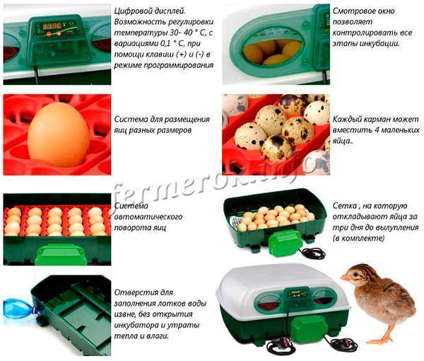 Инкубация цесарок в домашних условиях: пошаговое руководство, контроль и сроки инкубации