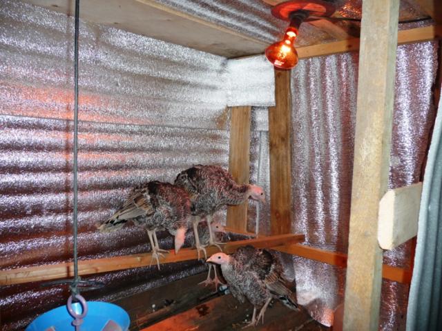 Обогрев курятника зимой: способы естественного и искусственного утепления