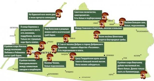 Грибы Калининградской области: съедобные и ядовитые. Где и когда собирать?