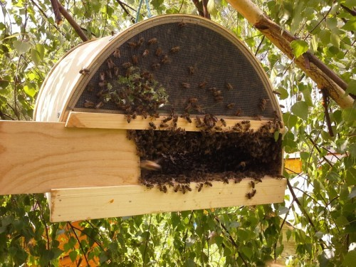 Роевня для пчел своими руками: пошаговые инструкции