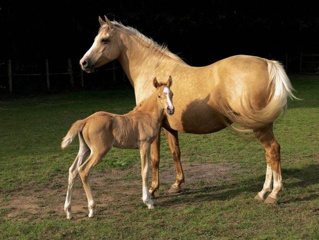 Содержание и уход за лошадьми в домашних условиях: выпас, кормление, случка, расходы