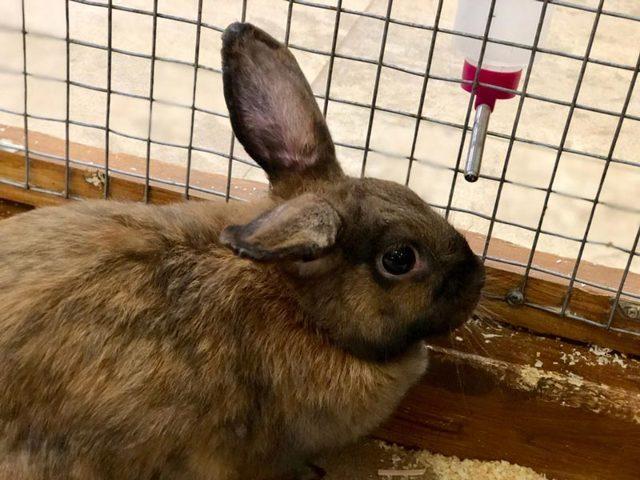 Поилки для кроликов своими руками: виды, инструкции, характеристики, уход и чистка