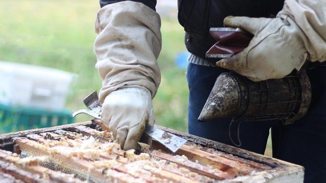 Обработка пчел от клеща: способы, средства, сроки и профилактика