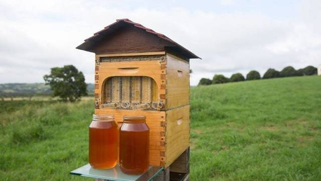Метод Цебро в пчеловодстве: суть, улей, вывод маток, зимовка, календарь, советы