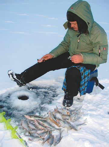 Рыба сиг: описание, фото, среда обитания, нерест, ловля и выращивание