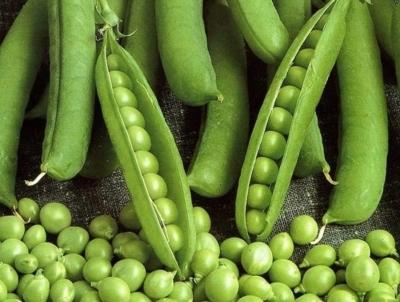Сахарный горох: описание культуры, лучшие сорта, посадка и уход