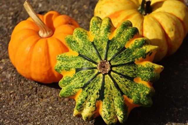 Декоративная тыква: описание, фото, агротехника, отзывы