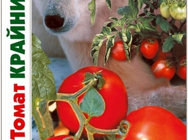 Томат Крайний север: описание сорта, фото, урожайность, выращивание и отзывы