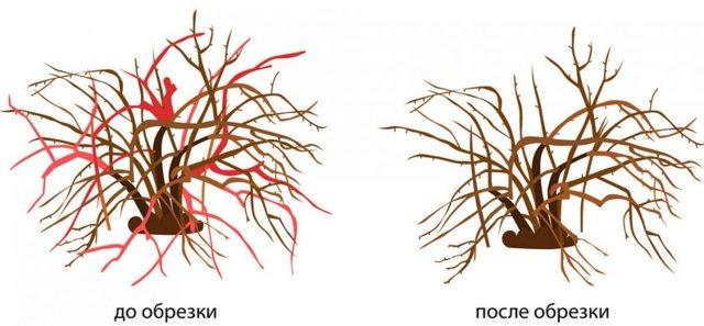 Крыжовник Грушенька: характеристики сорта, плюсы и минусы, выращивание, отзывы