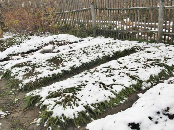 Посадка лука осенью под зиму: правила, технологии, полезные советы