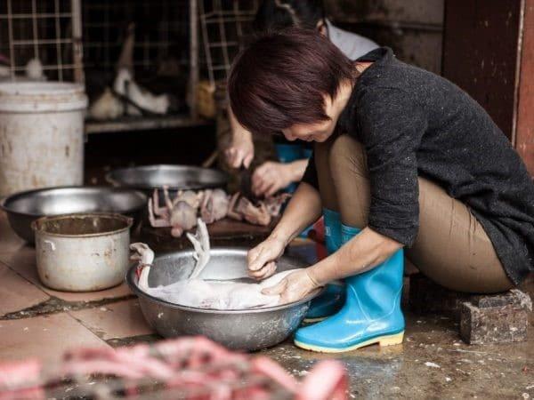 Как ощипать утку: описание методов обработки птицы