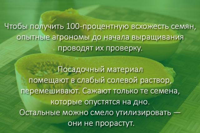 Тыква Баттернат: описание сорта, фото, выращивание и уход