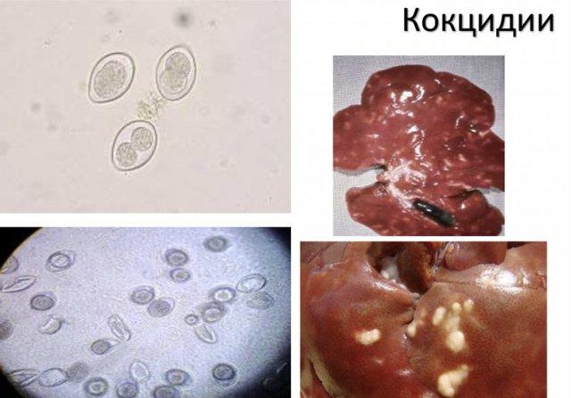 Болезни нутрий: их признаки, лечение и профилактика