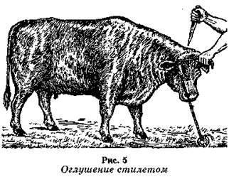 Забой страуса: правила, подготовка, методы убоя и ошибки новичков