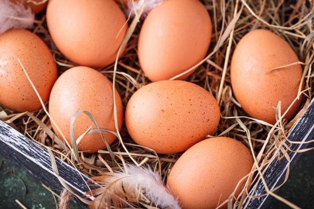 Как и когда закладывать куриные яйца в инкубатор: пошаговая инструкция и полезные советы